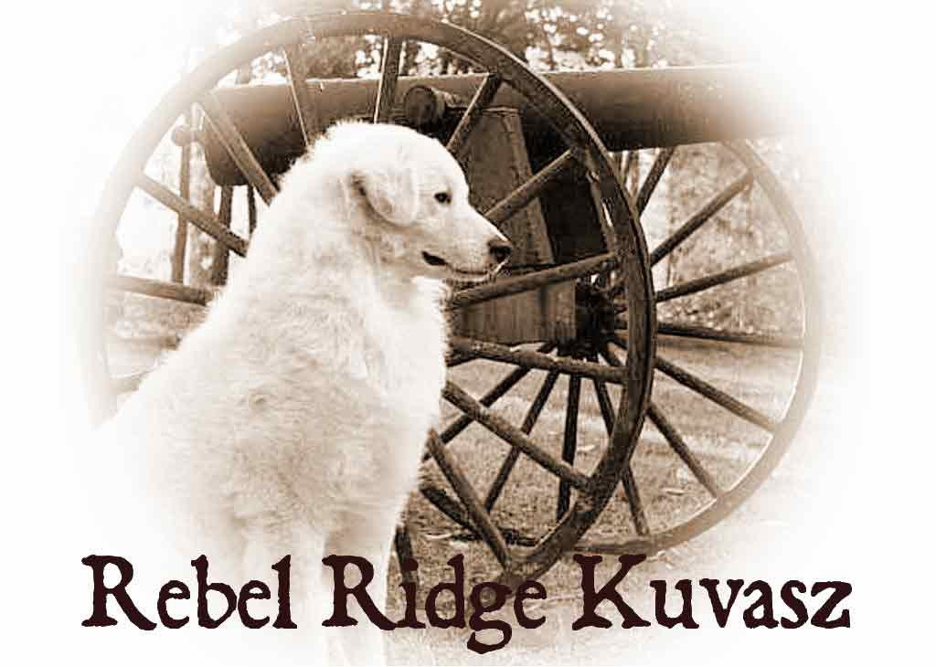 Rebel Ridge Kuvasz